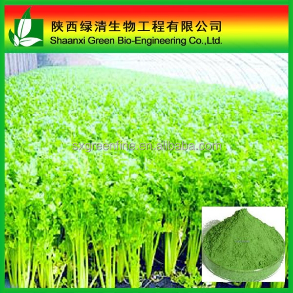 Celery Juice Power 100% Water-soluble Organic/dried Celery Powder And Celery Leaves /Natural Herb Extract Colchicine 98% By Hplc