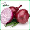 /product-detail/chinese-onion-china-red-onion-fresh-red-onion-1055072779.html
