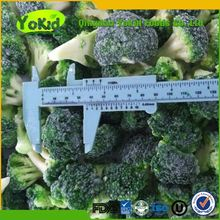 chinese new season vegetable frozen broccoli with favorable price