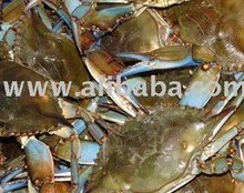 Medium, Large and Jumbo Louisiana Live Blue Crab