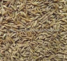 cumin seed at modest price