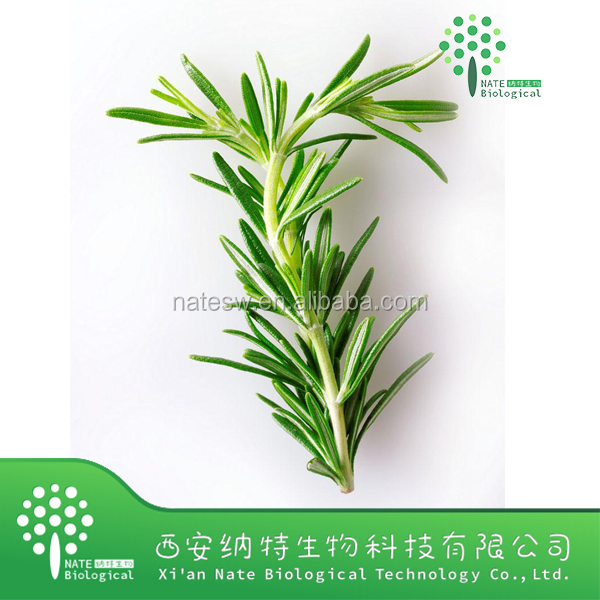 100% Natural Water Soluble Rosemary Extract/ursolic Acid 98%
