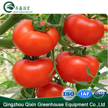 Commercial Mini Poly Film Tunnel Tomato Greenhouse