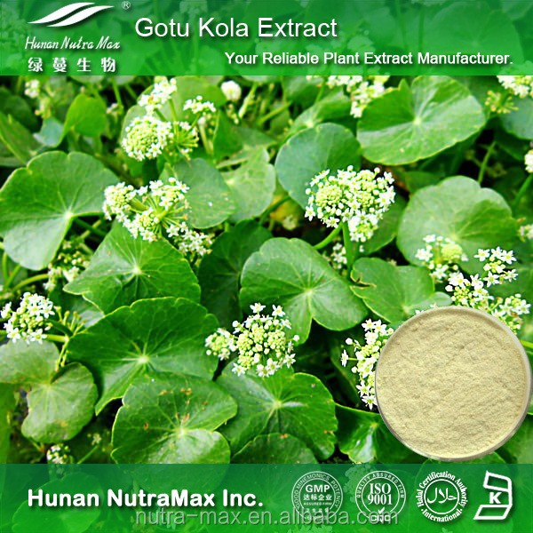 Gotu Kola Herb P.E., Gotu Kola Triterpenes, Centella asiatica P.E. with Best Quality