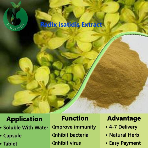 Isatis Root Extract (latin Name:isatis Tinctoria L.) Ban Lan Gen Extract Radix isatidis Extract Powder