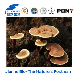High anti fatigue and anxiety removing ganoderma extract Polysaccharides 10%-50%, triterpene 1-15% with reasonable price(UV)