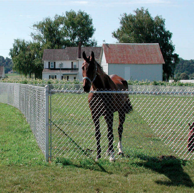 High zinc coating galvanized horse chain link fence mesh for animals