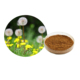 100% natural & Organic dandelion extract flavones 20% powder