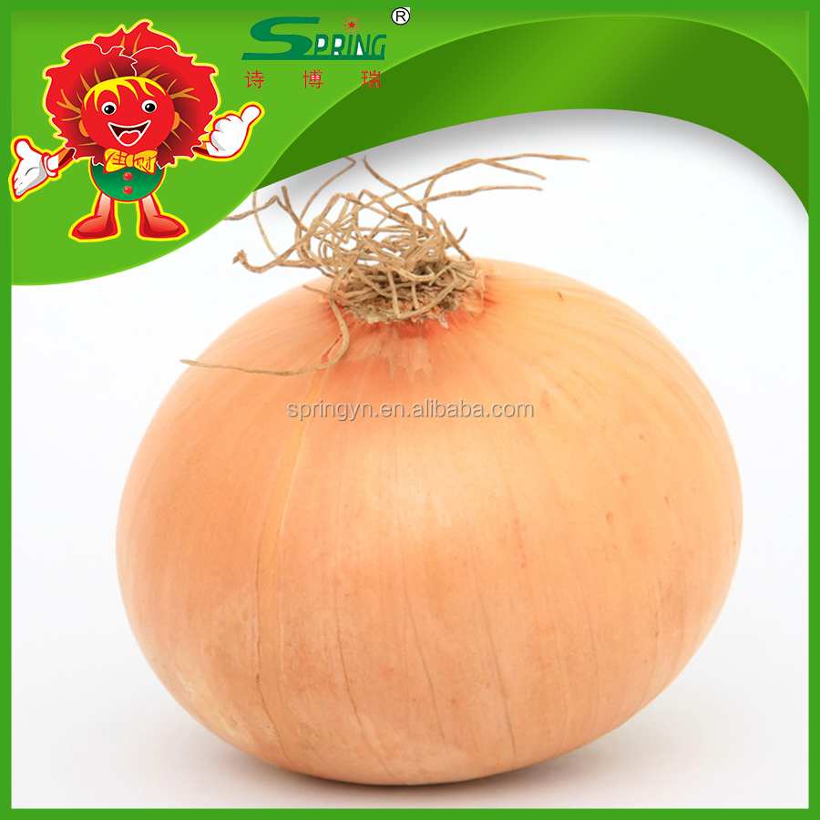 Super Quality Golden Onion without Pesticide Residue