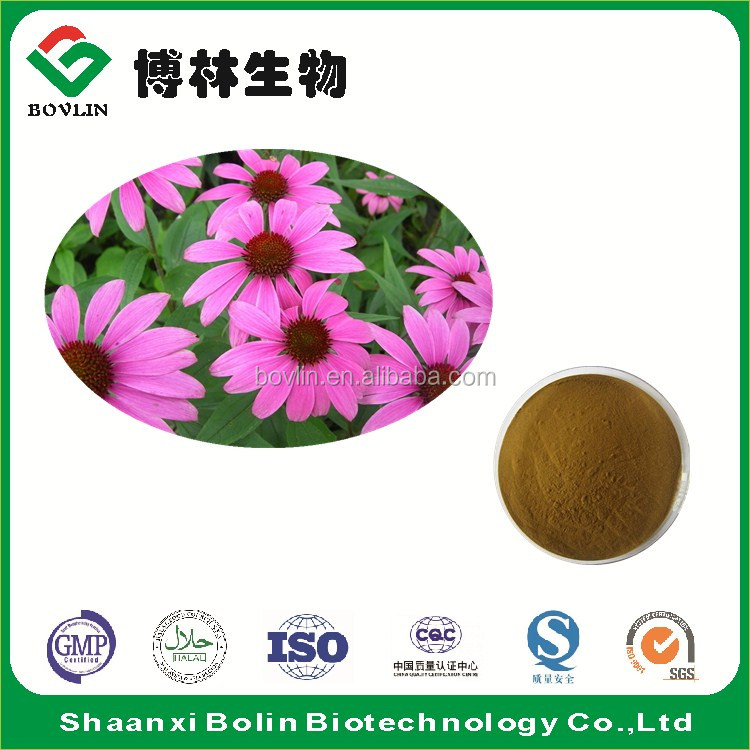 2017 New Batch Echinacea Purpurea Herb Extract Powder Chicoric Acid for Preventing the Flu in Medicine Grade