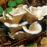 Free sample Oyster Mushroom Extract / Oyster Extract Powder / Polysaccharides >10%~45%