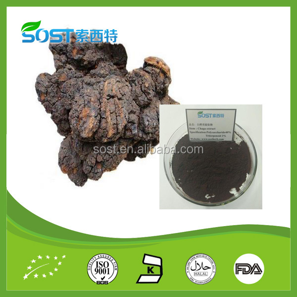 Hot Sale Chinese chaga mushroom extract powder