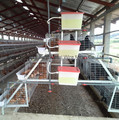 Chicken Farm in Fiji Automatic Poultry Equipment