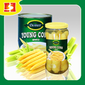 Popular healthy young corn canned with 3 years shelf life