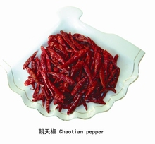 High Quality Indian Dried Red Chilli Whole