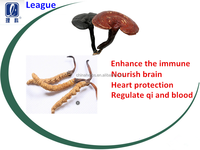 League brand Ganoderma lucidum Caterpillar fungus capsule enhance immunity Cardiovascular regular Qi and blood