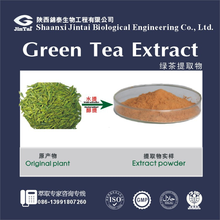 Factory Price Green Tea Extract