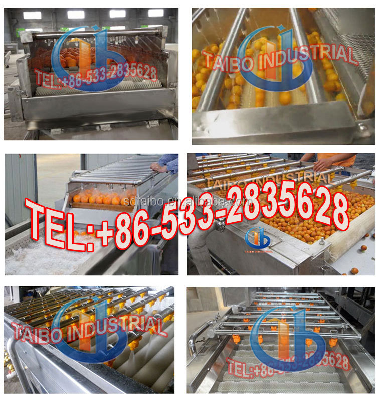 Standard wooden case packing -fresh apple/lime/lemon /mango cleaning machine vegetable and fruit washing machinery