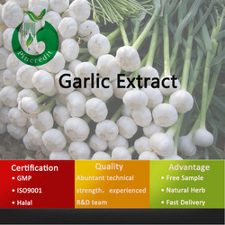 Fresh Garlic/Allicin Garlic Extract/Allicin Powder