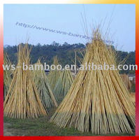 Bamboo poles support apple tree growing