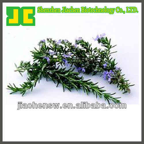 Sell 100% organic Rosemary P.E. in Carnosic acid 5%~90% HPLC