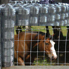 Galvanized Cattle field fence/ cattle field fence for livestock/ wholesale bulk cattle field sheep wire mesh fence
