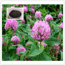 100% Pure Natural Red Clover Extract powder Isoflavone 40% cas 977150-97-2