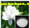 GMP Factory Supply Pure Natrual Cape Jasmine Fruit P.E