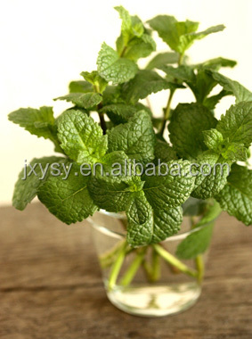 daily favour peppermint essential oil 50% /menthol oil in bulk