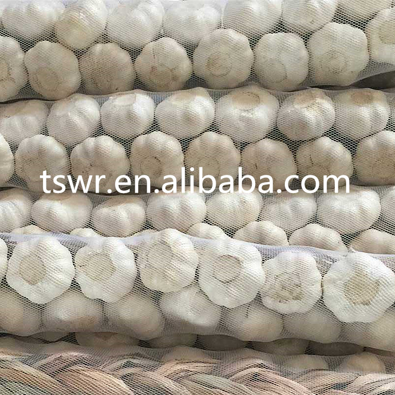china garlic price fresh white garlic in stock for export