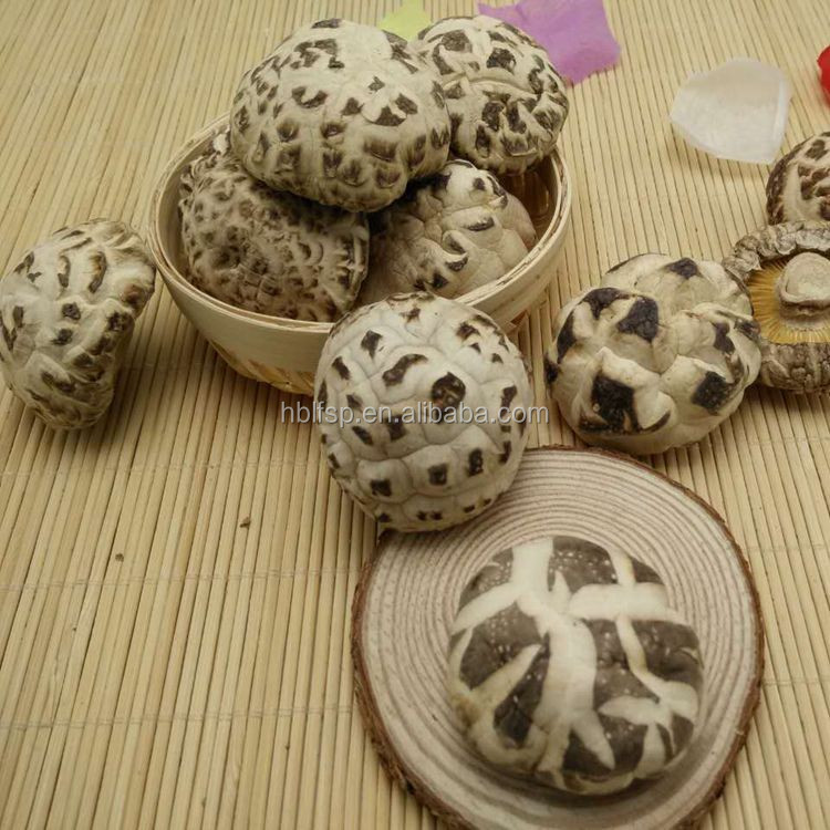 Dried White Flower Shiitake Mushroom Whole in Autumn Cultivated