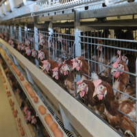 High-quality production of new design live chicken cage farm for sale in malaysia animal products