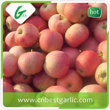 High quality fresh red star apple
