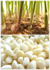 chinese Organic new fresh white garlic