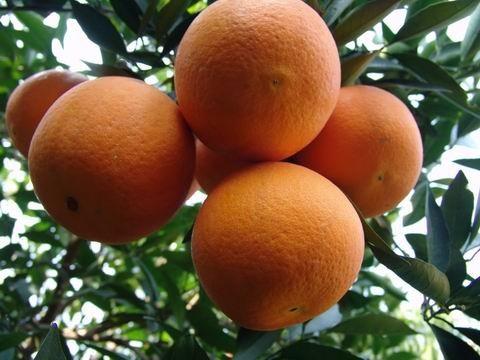Novel Orange 01.JPG