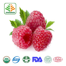 Nature Raspberry Fruit Extract/ Raspberry Extract Powder/10%-98% Raspberry