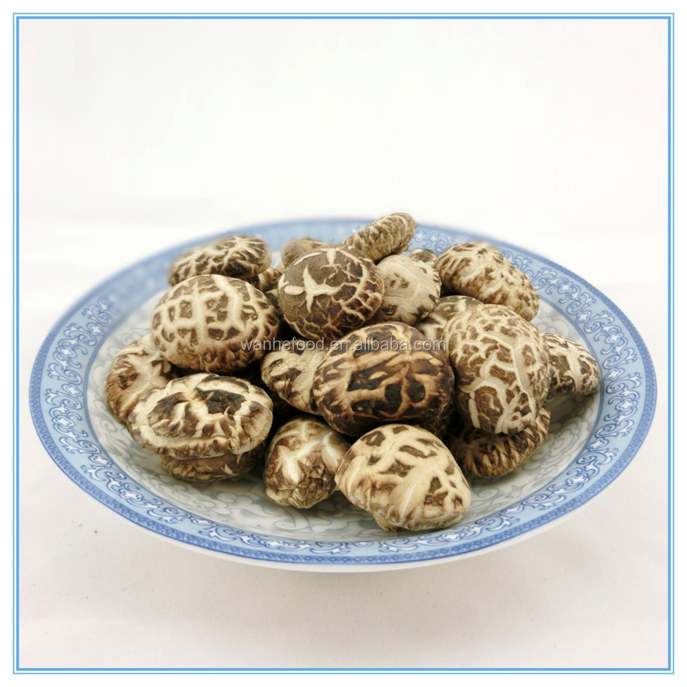 Dried Thick Cap Shiitake Mushroom Growing in Antumn