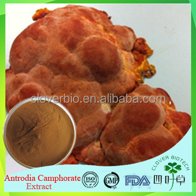 100% natural Antrodia Camphorate extract, The forest ruby extract, Triterpene 1%