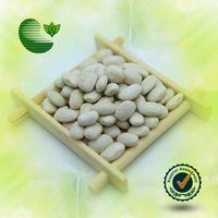 2014 Crop Medium White Kidney Bean (Square Type)