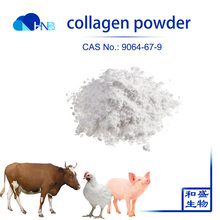 Food and feed grade hydrolyzed protein Bovine Collagen powder / chicken cartilage collagen type 2