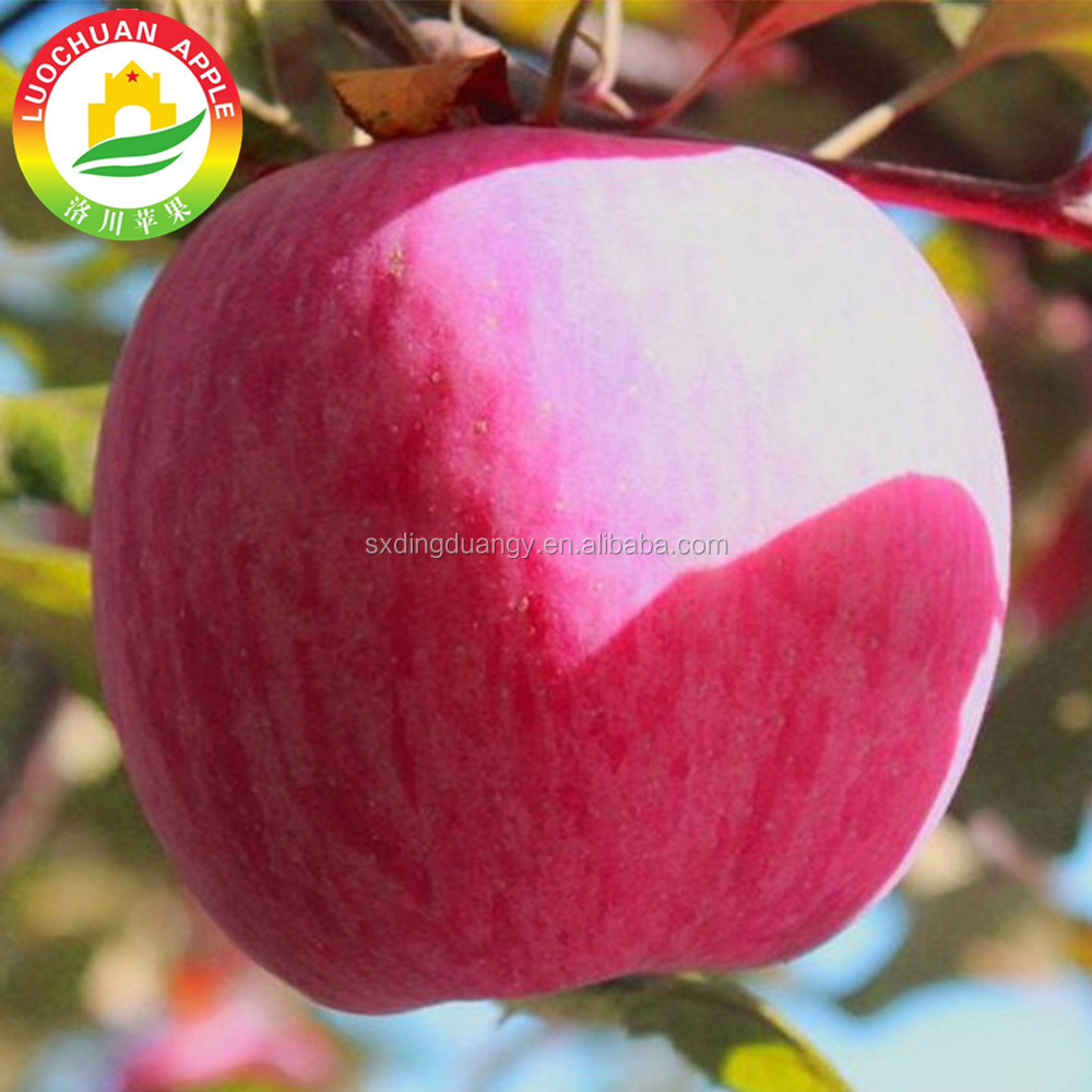 Great Quality Crop Top Blush Red Crisp Fuji Apple <strong>Fruit</strong> From Gansu Province