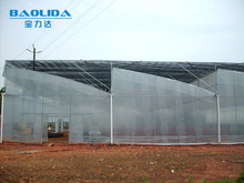 multi span vegetable greenhouse covered with polythene film