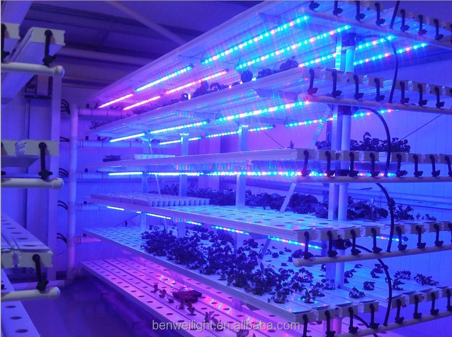Full spectrum pink/red/blue led grow light hydroponic T8/T5 led cob grow light