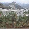 Agricultural Crop Protection Bird Netting, Mist Netting (6-50M)