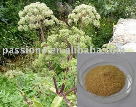 Chinese herbal Angelica P.E.by HPLC, brown fine powder