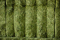 Alfalfa Hay Bales for Animal Feed Turkish Alfalfa