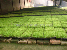 Direct Factory Price customized export propagator plant growing trays