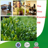 100% Pure Essential Oil Bulk Tea Tree Essential Oil for Treat Acne Naturally