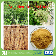 High quality natural black angelica angelica sinensis extract