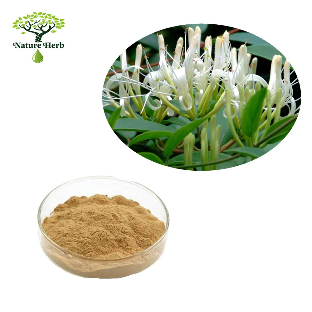 98% HoneySuchle Flower Extract from Flos Lonicerae